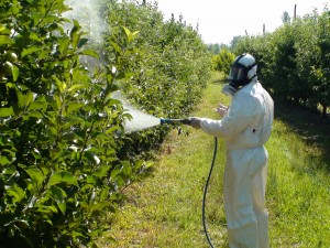 photo.spraying